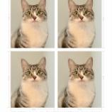 『スマホで証明写真30円!パスポート申請してきました!』の画像