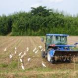 『トラクターに群がるサギ』の画像
