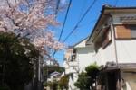 ひょんなところにも桜はあってそれが地元な星田2丁目~交野まちなみ日記No.50~