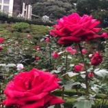 『【朝のご挨拶】少しでも皆様に喜んでいただければと始めた「朝のご挨拶」投稿。続けているうちにお花撮影に魅了されるようになりました。』の画像