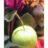 『りんごの歌』の画像