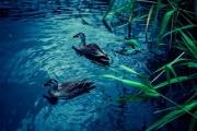 人・水・自然とのハーモニー!~日本大学 水環境システム研究室の紹介~