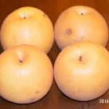 『国東の食環境(135)新高梨』の画像