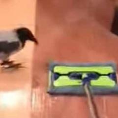 【イヌ】 私が床掃除をしていた。鳥がモップをつついてくる。邪魔しちゃダメ! → 同居犬はこうします…
