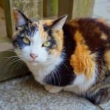 『【写真】RX1 佐倉 - 麻賀多神社の猫』の画像