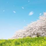 『2019年 春の総括』の画像