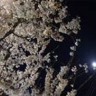 『季節の始動』の画像