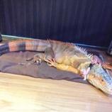 『爬虫類とたわむれる2かいめ』の画像