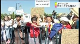 ルーマニア「野犬が多すぎて危ないから、殺処分始めるわ」 → 動物愛護団体「非人道的だ!」