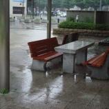 『すずめの雨宿り』の画像