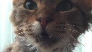 松井玲奈さん、保護されていた猫を引き取り自宅で育てる。名前は「むにゃげ」