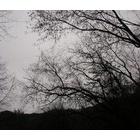 『明るい森』の画像