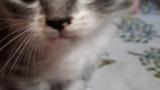 子猫拾ったから数日間一緒に暮らした結果www(※画像あり)