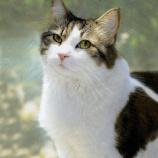 『死を予知する猫オスカーちゃん』の画像