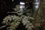 交野市『雪』積もってますよ!~トーマスも雪!そして明日の気になる天気は!?~