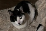 行方不明だった白黒猫のいわおくん、無事に見つかり保護!〜星田山手のカンガルー公園にいたみたい〜