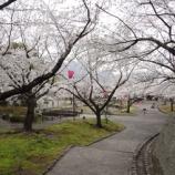 『桜@中央公園』の画像