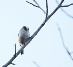 2019年12月14日の野鳥公園