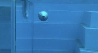 【Twitter】アザラシの連続写真が「癒される」 「泳ぎ方が面白い」