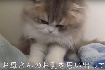 お母さんのことが恋しくて…猫のふみふみ動画9選