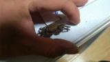 物音するからゴキブリかと思ったらカニ出てきてクソワロタ(※画像あり)