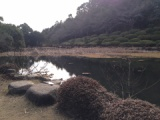 『冬の周南緑地(西緑地)ハス池を巡る』の画像