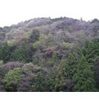 『萌えだす春の森』の画像