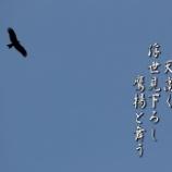 『鷲となりトンビとなりて』の画像