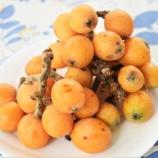 『国東の食環境(333)ビワ』の画像