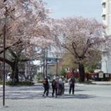 『4月の東大和市花』の画像