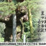 『笠マツの巨木』の画像
