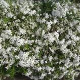 『4月の花』の画像