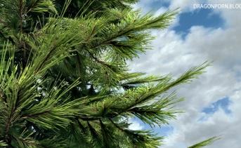 Skyrim 3D Trees