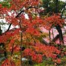 紅葉が始まりました!!