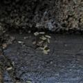 鈴虫飼育日記 <10>メスもすべて死亡 今年の鈴虫シーズン終了