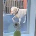 イヌと少年が庭の「トランポリン」で遊んでいた。こうやってやるんだワン! → 犬は教えているようです…