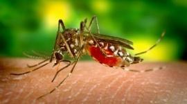 【ブラジル】遺伝子組み換えの蚊を野生に放って撲滅する実験が失敗、予想外の結果に