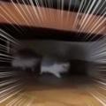 小さな生き物が部屋の中を走り出す。どこへ行くにも一緒だよ♪ → 2匹にハリネズミはこうなります…
