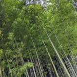 『茶筌の里 奈良高山』の画像