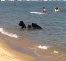 【動画】熊の親子が海で遊んでた