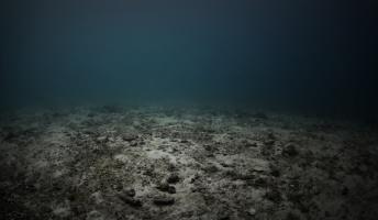 深海や水族館などに対する恐怖心、これ分かる奴いる?