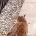 ネコが庭を散歩する。いっしょに行く~♪ → ウサギさんはこうなります…