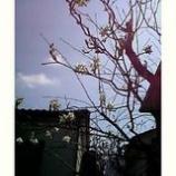 『草木花のバトンタッチ』の画像