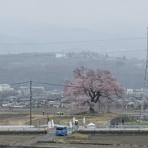 わに塚の桜 四季 2020 (地元発信)