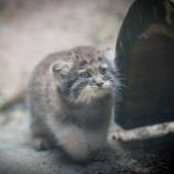 『まぬる猫』の画像