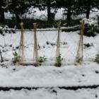 『時ならぬ雪』の画像
