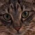 【ネコ】 帰宅したらすぐに「手洗い」をしなければ! 飼い主がバスルームへ行く → あの…すみませんが…