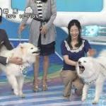 NTV朝の放送番組ZIPの人気犬ジッペイ兄弟が死亡! 原因は車の中でクーラーが切れ熱中