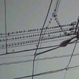 『ヒッチコックの「鳥」!?』の画像