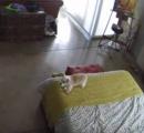 ネコに怒られて黙り込む子イヌが話題に